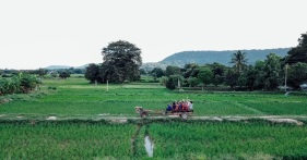 13.Rural_OTOP Tourism